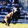 Patria Gaucha 2013